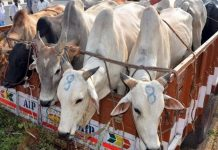 Man beaten to death suspecting of cow smuggling