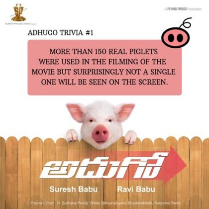 Few Facts of Adhugo Piglet Bunty