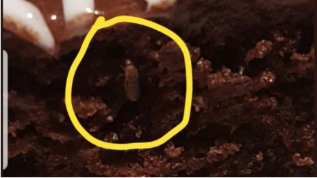 Insect found in Chocolate Cake at IKEA Hyderabad